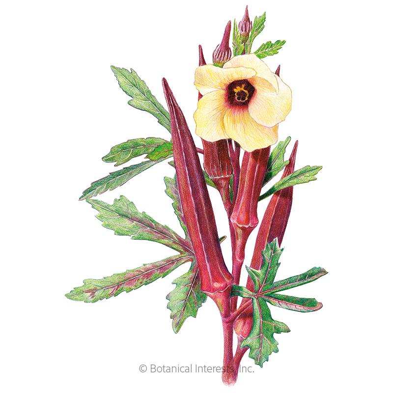 Red Burgundy Okra Seeds