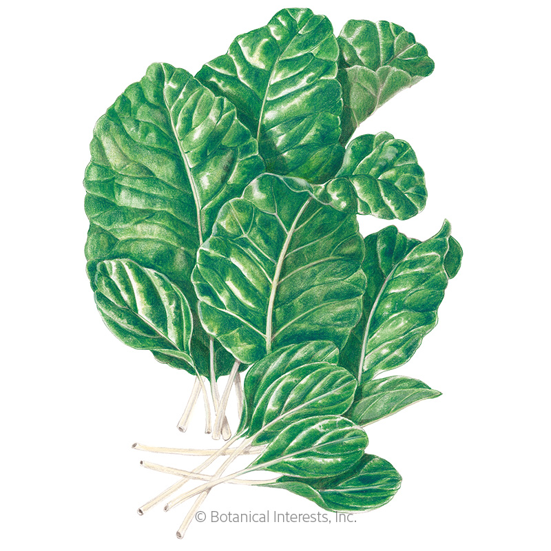Tendergreen Mustard Spinach Seeds