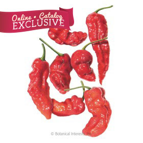 Ghost Bhut Jolokia Chile Pepper Seeds - Online Exclusive