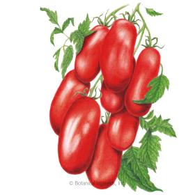Supremo Bush Roma Tomato Seeds