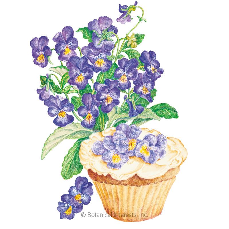 King Henry Viola Seeds
