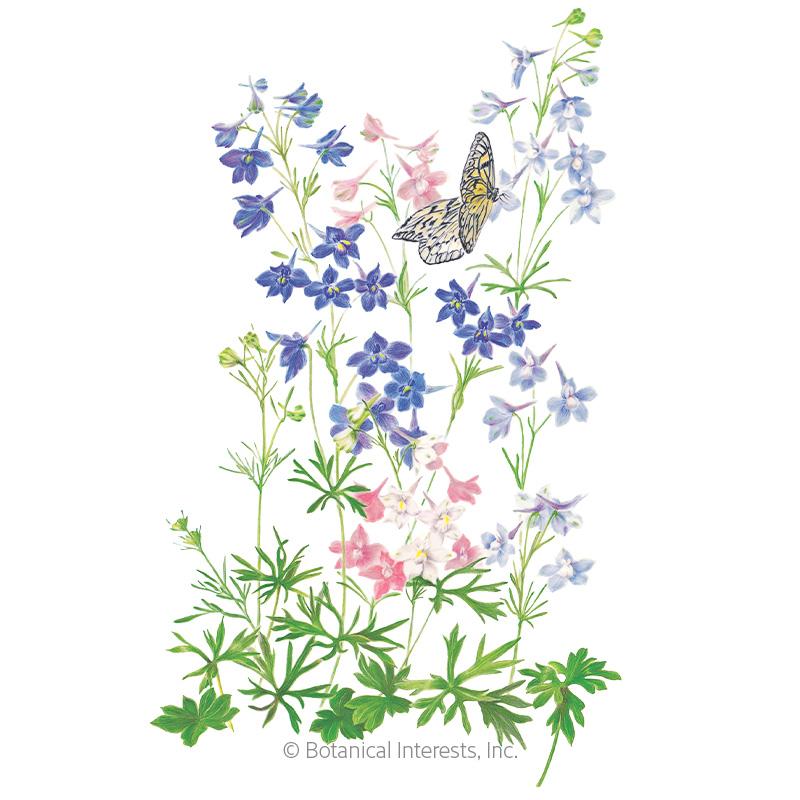 Butterfly Blend Delphinium Seeds