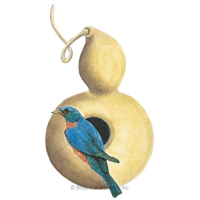 Birdhouse Hard-Shelled Gourd Seeds