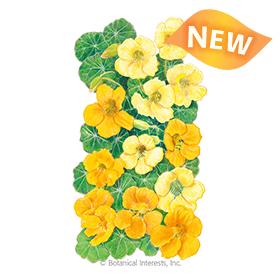 Butterscotch Nasturtium Seeds