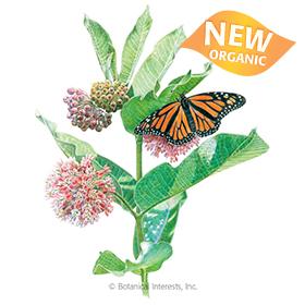 Common Milkweed/Butterfly Flower Seeds