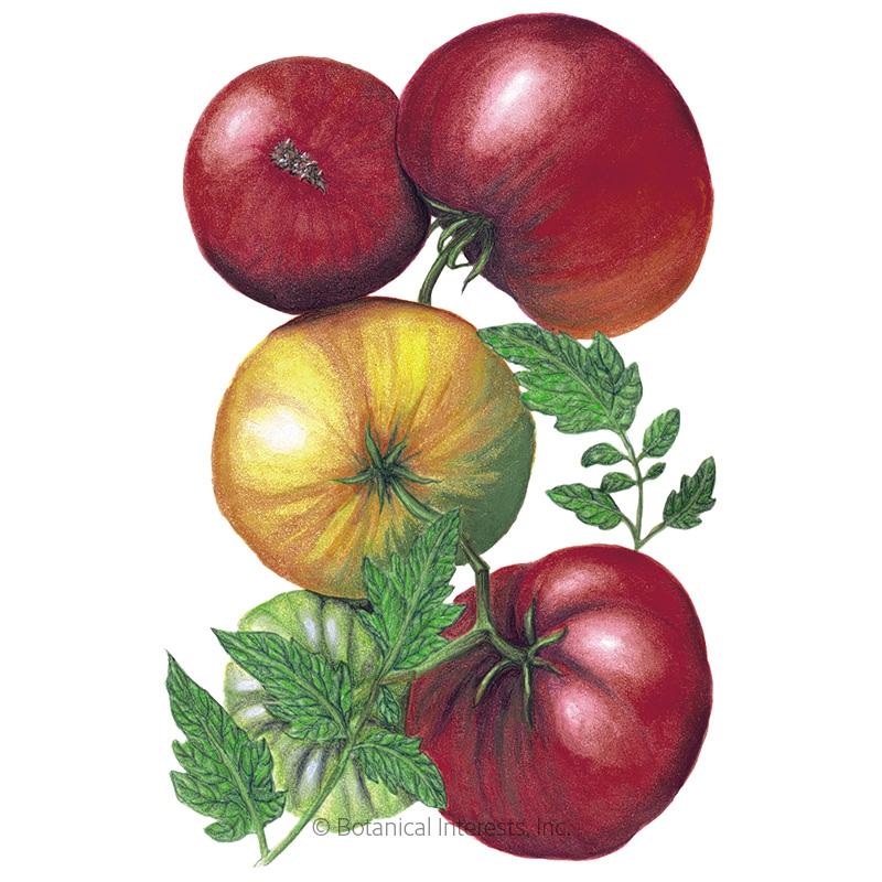 Cherokee Purple Pole Tomato Seeds