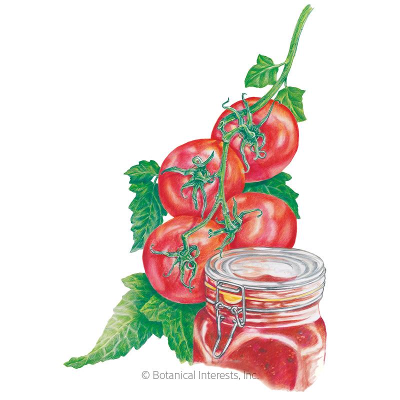 Ace 55 Bush Tomato Seeds