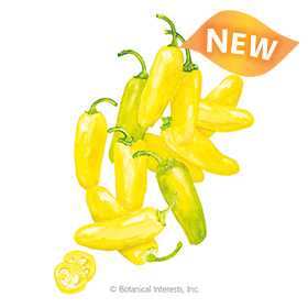 NuMex Lemon Spice Jalapeño Chile Pepper Seeds