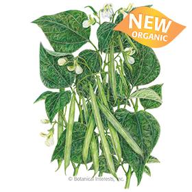 Jade Bush Bean Seeds