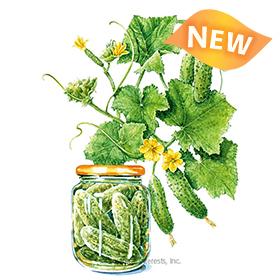 Hokus Gherkin Cucumber Seeds