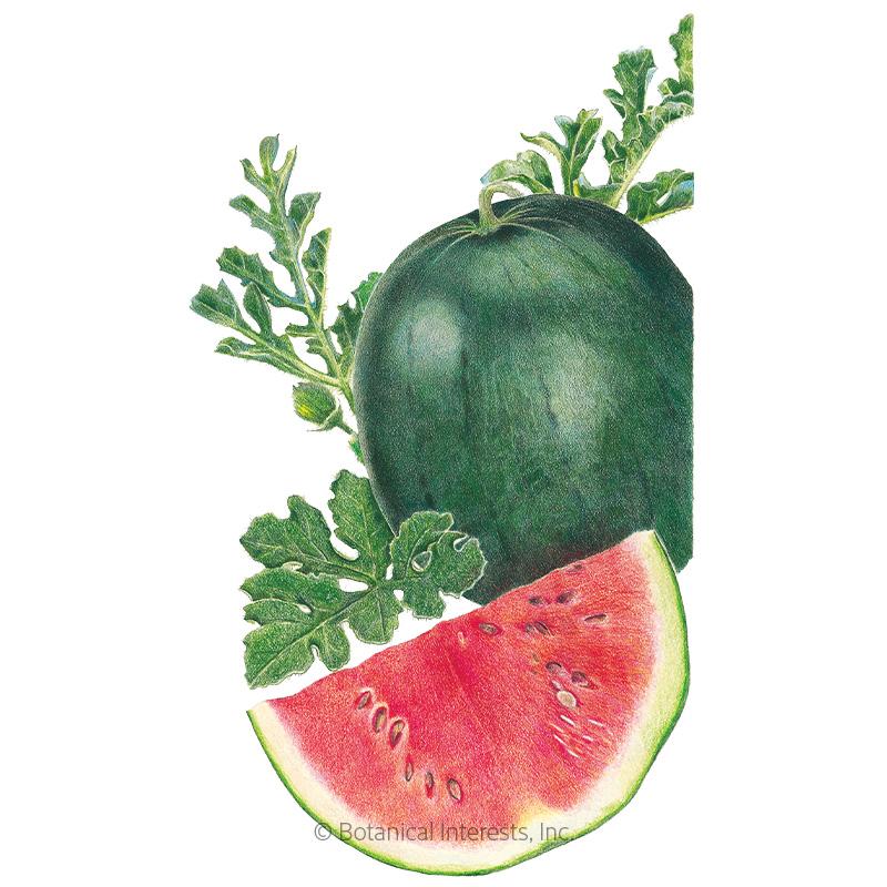 Sugar Baby Watermelon Seeds