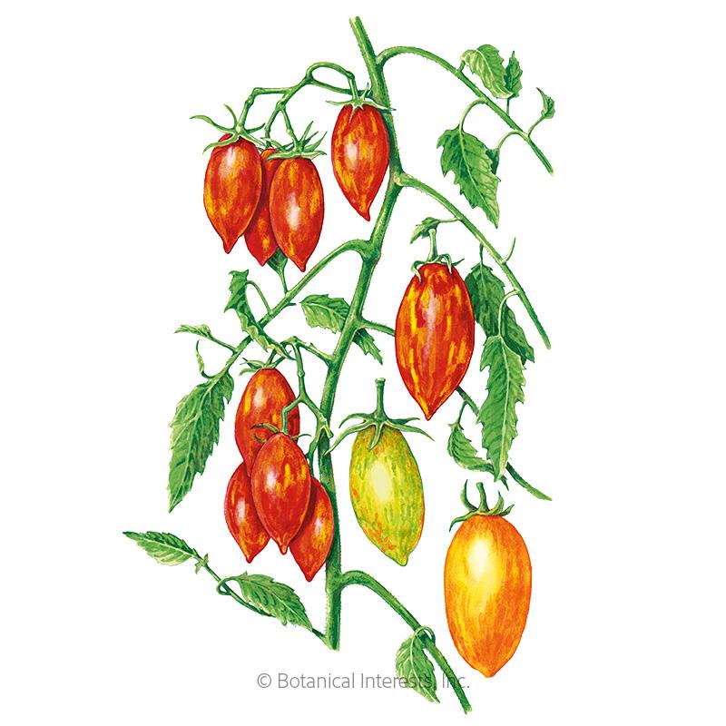Artisan Tiger Stripes Blend Pole Cherry Tomato Seeds