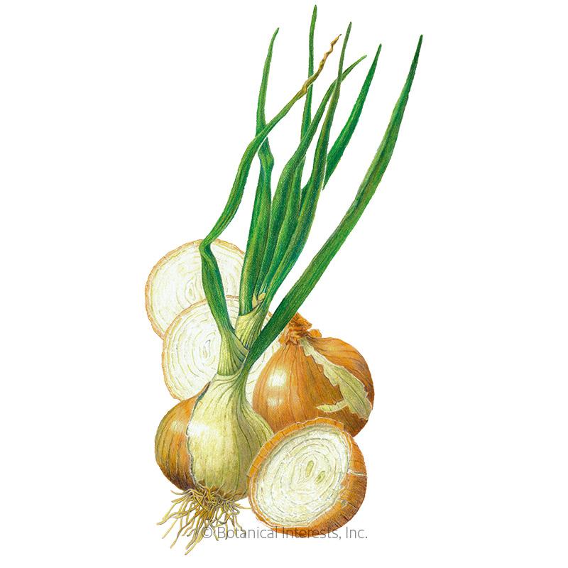 Walla Walla Bulb Onion Seeds