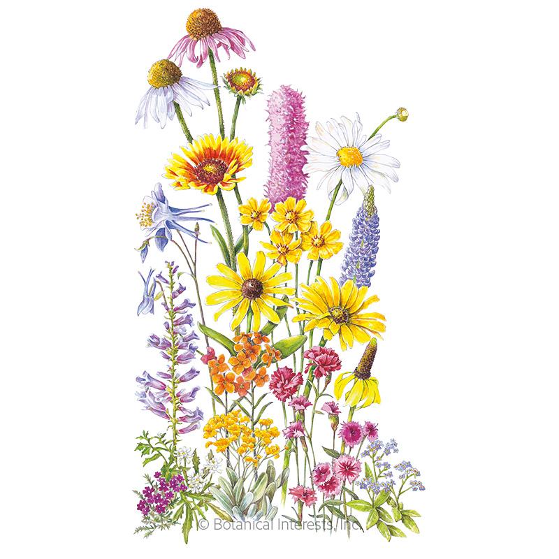 Perennial Bloom Flower Mix Seeds