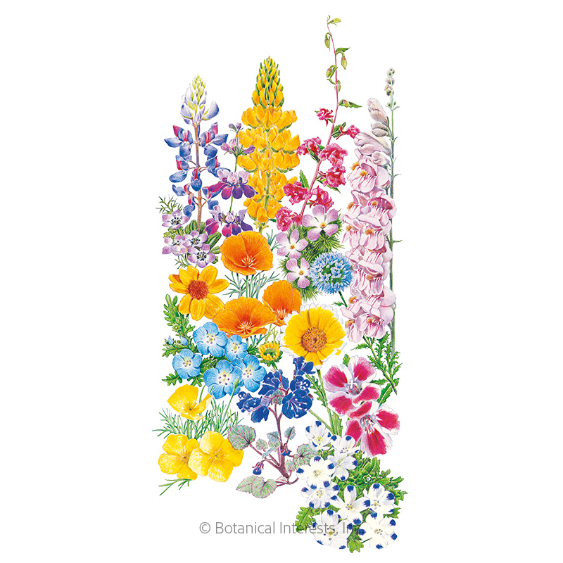 California Color Flower Mix Seeds