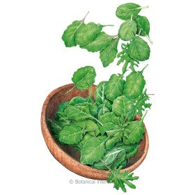 Superfoods Baby Greens Seeds
