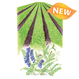 Hairy Vetch Cover Crop Seeds