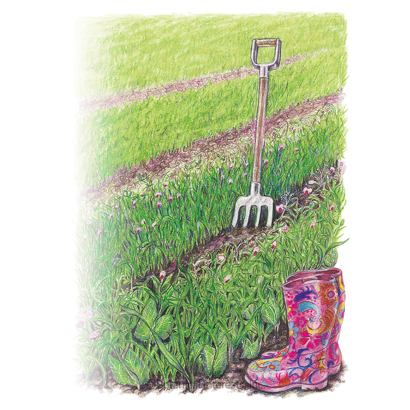 Soil Builder Peas and Oats Cover Crop Seeds