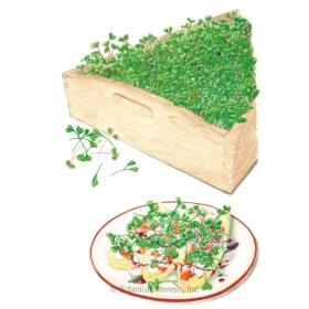 Mellow Blend Microgreens Seeds