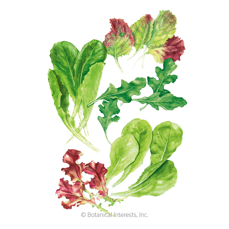 Snappy Fresh Mesclun Baby Greens Seeds