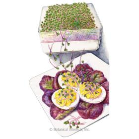 Purple Kohlrabi Sprouts Seeds