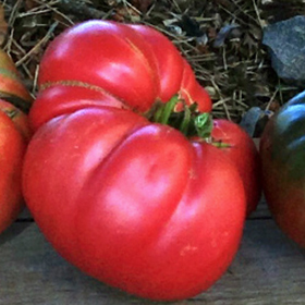Tomatoes: Late Season Harvest and Storage Techniques