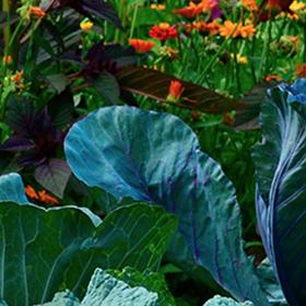 6 Steps to an Organic Garden