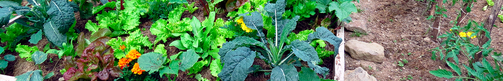 10 Tips for Beginning Seed Gardeners
