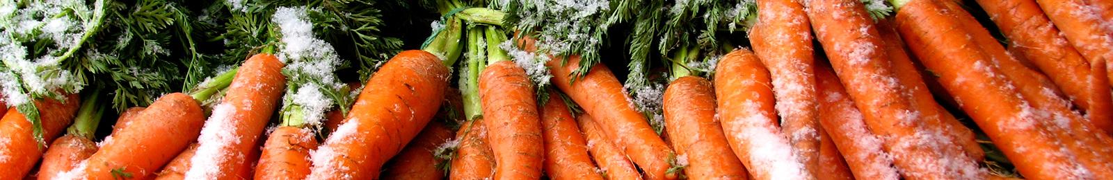 Frost Tolerance of Vegetables