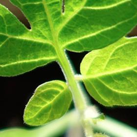 5 Steps to Harden Off Seedlings