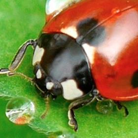 Pests: Prevention Methods