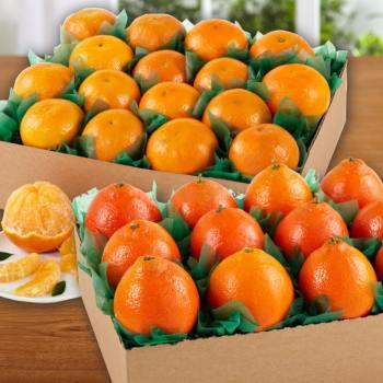 Product Image of Honeybells & Orris