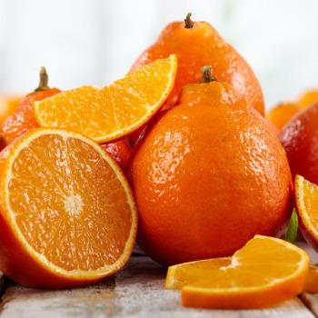 Florida Tangerines & Tangelos