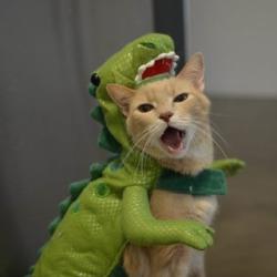 Kitteh Dernerser Costume