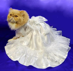 Kitteh Bridal Gown