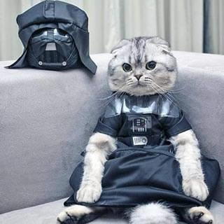 Kitteh Darth Vader Costume