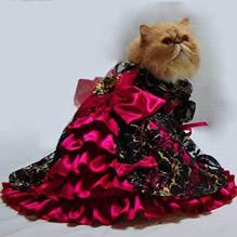 Kitteh Tango Dress & Tiara