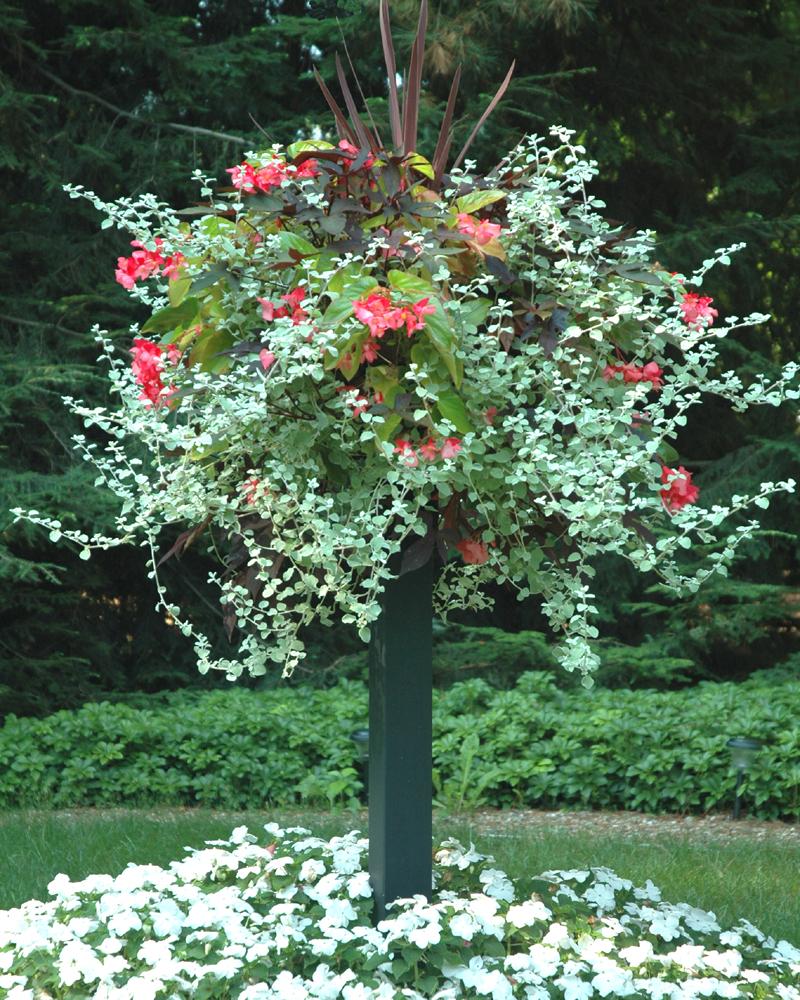 Garden Bush: Border Column Photo Gallery: Kinsman Garden Company