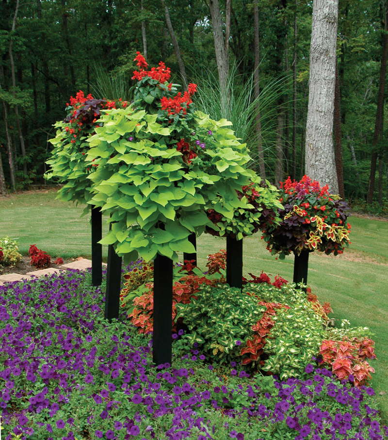Border column photo gallery for Outdoor pictures for gardens