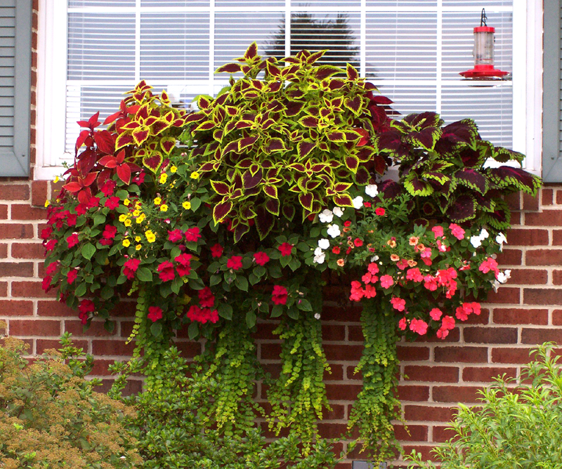 Window Box And Wall Planter Photo Gallery
