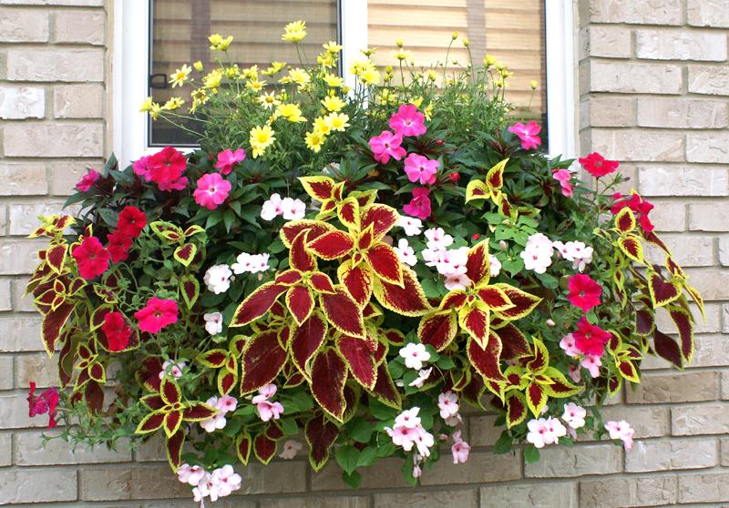 Hanging Flower Baskets Spokane : Window box and wall planter photo gallery
