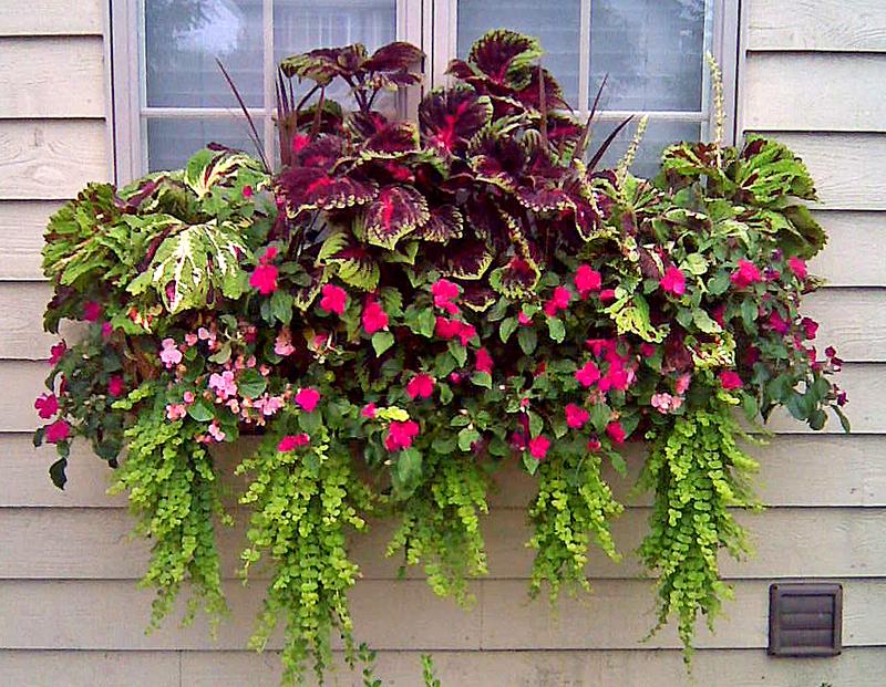 Window Box And Wall Planter Photo Gallery Kinsman Garden