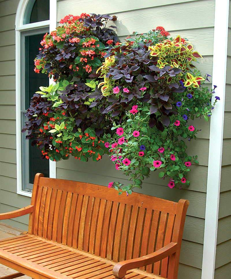 window box and wall planter photo gallery. Black Bedroom Furniture Sets. Home Design Ideas
