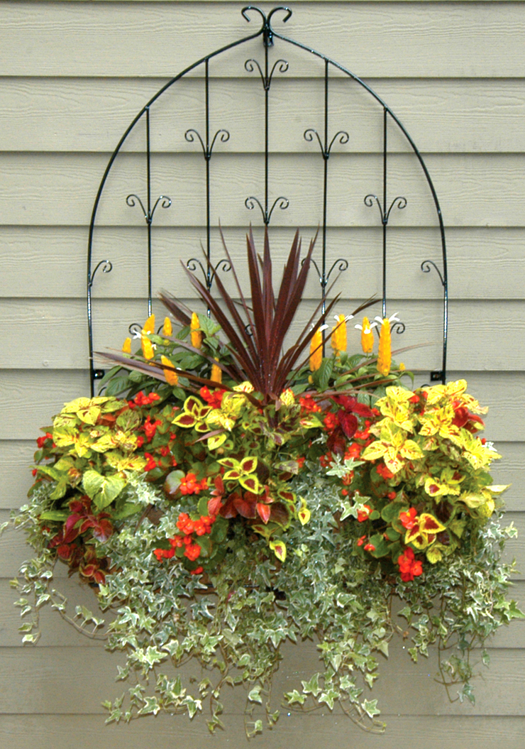 Window box and wall planter photo gallery for Wall plants outdoor