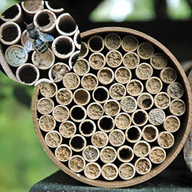 Mason Bee Nest Kits