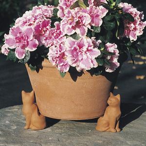Cat Pot Feet