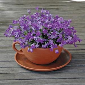 Giant Teacup And Saucer Planter Planters Kinsman Garden Company