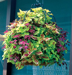 16 Inch Double Tier Imperial Hanging Planter