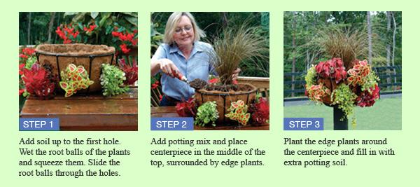 ** planting steps images **