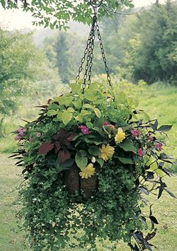 Medium Hanging  Garden w/Coco Fiber Liner Set